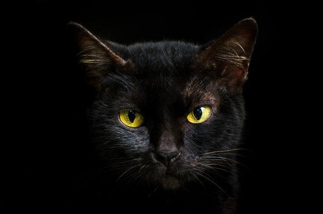 ruyada-kedi-gormek