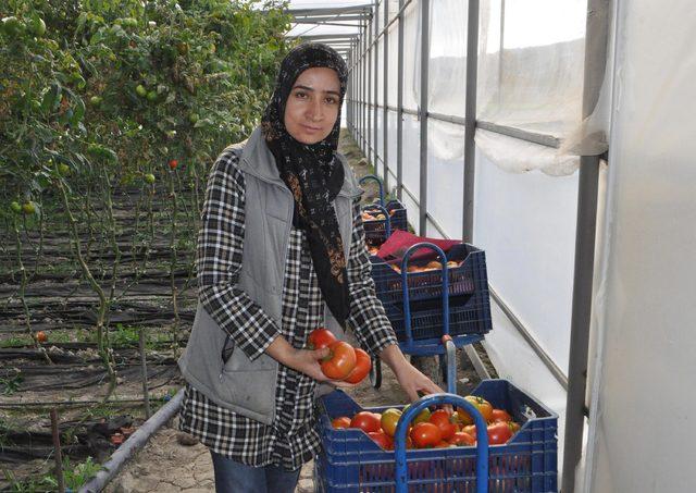 Çameli'de domates üretimi arttı, göç önlendi