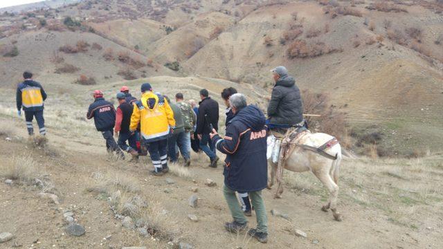 Domuzun saldırdığı çobanı köpekleri kurtardı