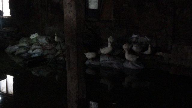 (Ek bilgi ve fotoğraflarla) - Kağıthane'de eski mandırayı su bastı, kümes hayvanları telef oldu