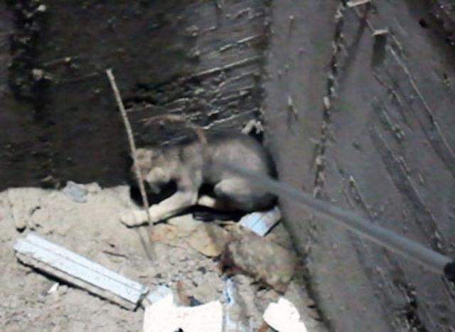 İnşaata düşen yavru köpek, annesinin havlamasıyla fark edildi