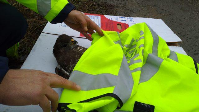 Polis memuru, yaralı şahinin üzerine yeleğini örttü