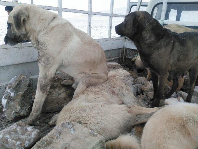 'Belediye görevlileri, sokak köpeklerini boş araziye bırakacaktı' iddiası
