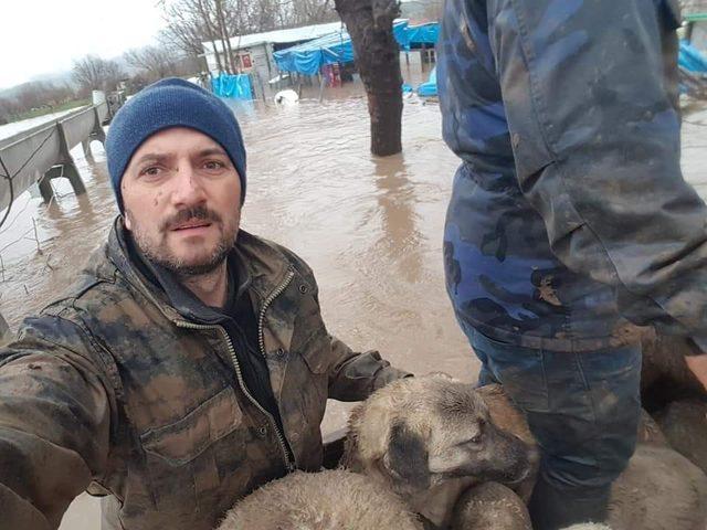 Sel baskınında mahsur kalan koyun ve köpekler kepçe ile kurtarıldı