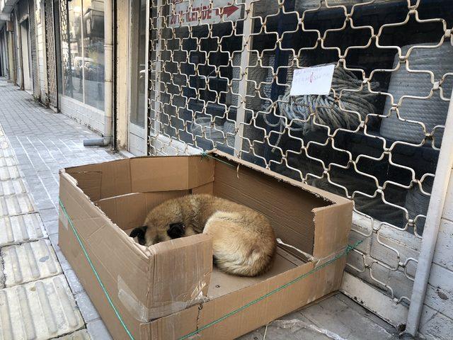 Sokak köpeğine kartondan yuva yaptı