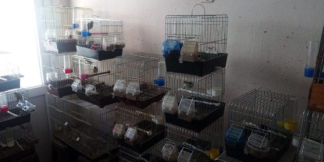 Koruma altındaki kuşların kafeste saklanmasına 9 bin lira ceza