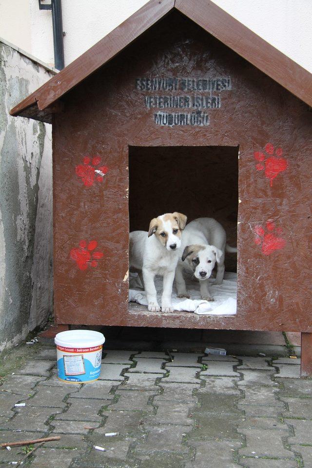 Sokak hayvanları unutulmadı: İlçeye 95 yuva yerleştirildi
