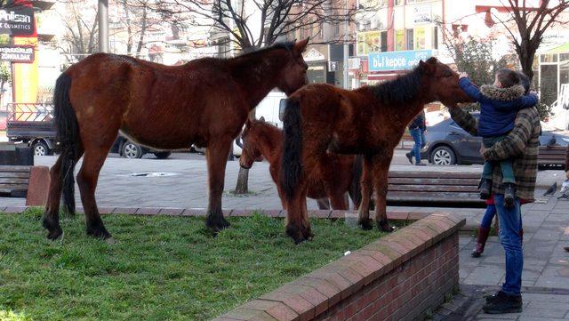 Parkın Misafirleri Biri Yavru 3 At Oldu Son Dakika Haberler