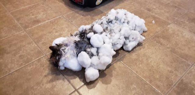 frozen-cat-rescue-fluffy-burried-in-snow-animal-clinic-kalispell-montana-2-5c5d3b48de7cc__700