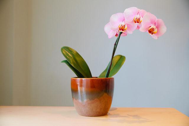 orkide saksisi