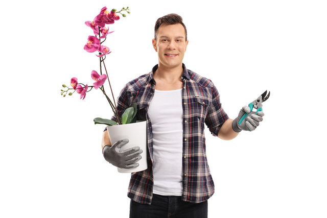 orkide budama