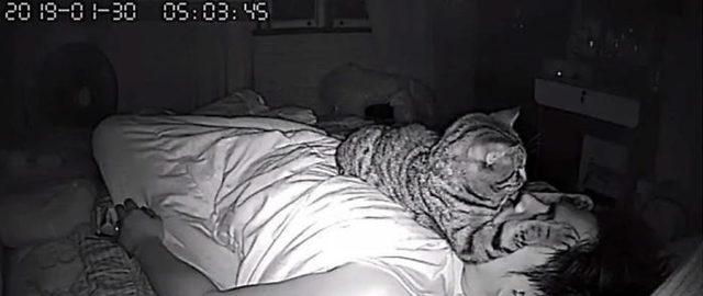 1553336928470-secret-camera-record-cat-sleep-night-26-5-c-94-a-2-cdabd-30-700