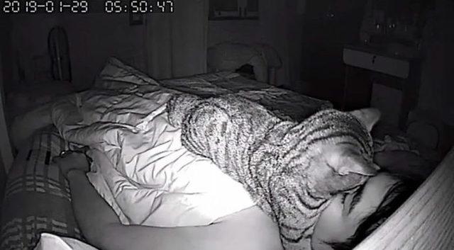 1553336928715-secret-camera-record-cat-sleep-night-27-5-c-94-a-2-cfaff-60-700