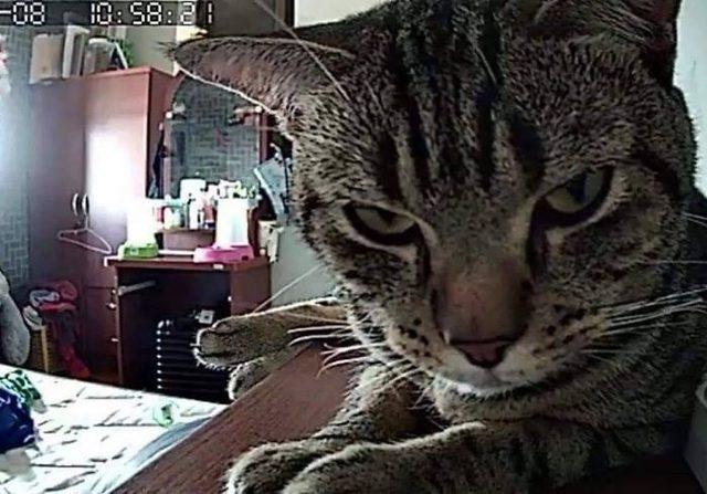 1553336929286-secret-camera-record-cat-sleep-night-68-5-c-94-a-3254-fa-59-700