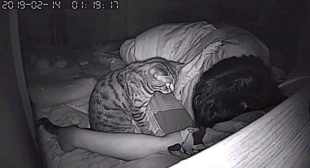 1553336930326-secret-camera-record-cat-sleep-night-74-5-c-94-a-32-ea-1-eea-700