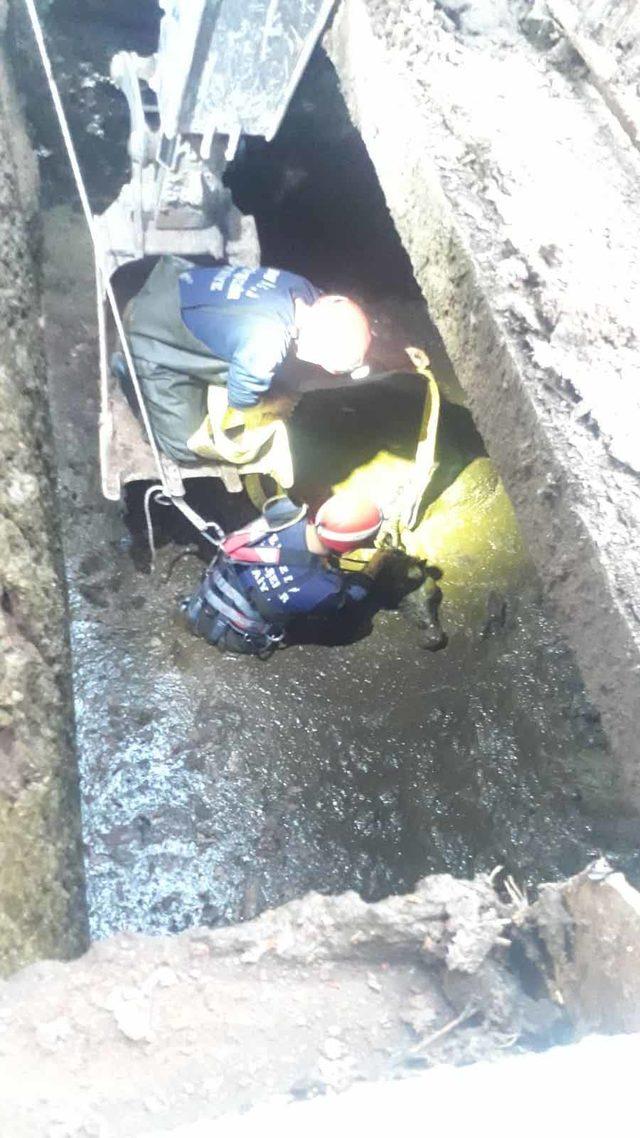 Atık tahliye kanalına düşen ineği itfaiye kurtardı