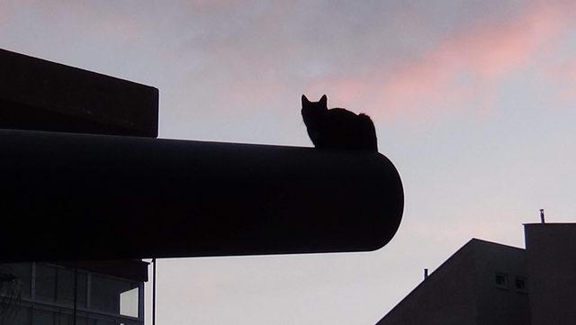 Tarihi top namlusunda şaşkınlık veren kedi yuvası