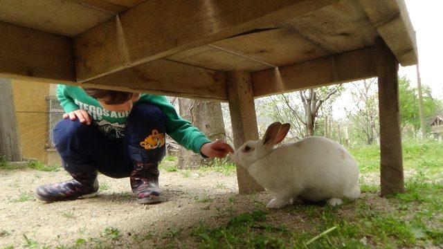 Kedi ile tavşanın dostluğu görenleri şaşırtıyor