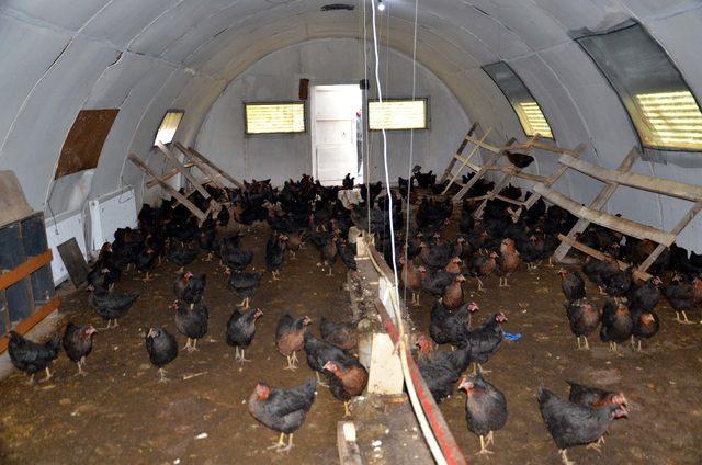 Tarihi köy enstitüsündeki okulda her öğrenciye bir tavuk