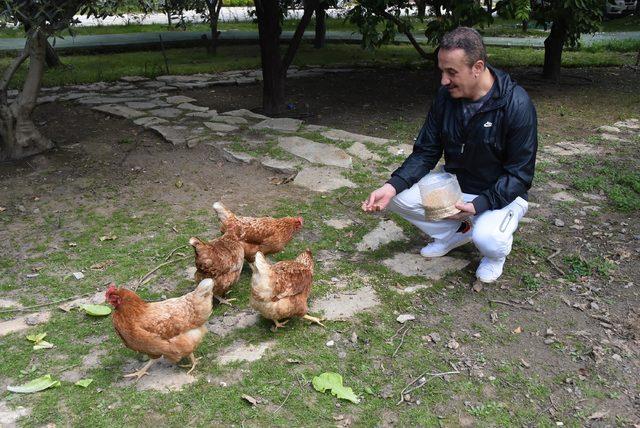 Siyaseti bırakan Şengül tavuk besliyor, bahçeyle uğraşıyor