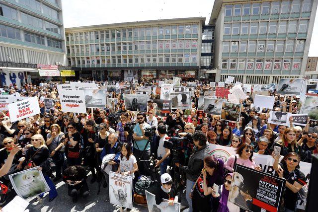 Ankara'daki hayvan katliamları protesto edildi