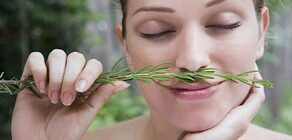 Bu Sır Çok Hoşunuza Gidecek: Bu Bitkiyi Koklamak Hafızayı Güçlendiriyor!
