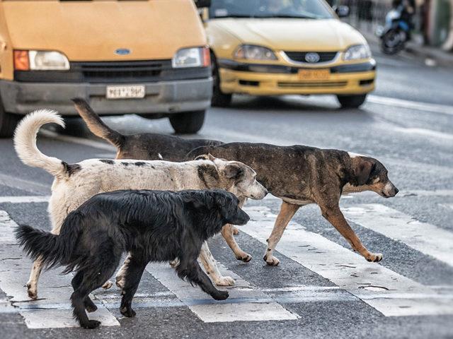 Köpek Saldırdığında Nasıl Davranmalısınız?