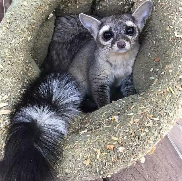 kedi4
