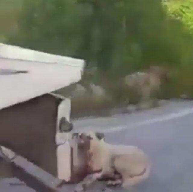 Komşuların tavuklarına saldırdı diye köpeğini çekicinin arkasında sürükledi