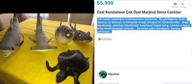 İnternette kurutulmuş deniz canlıları satışına tepki