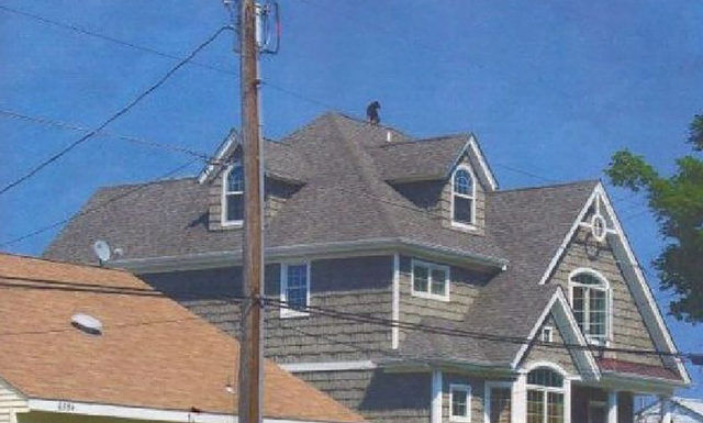 19-dog-on-the-roof-e1512059727223-70239