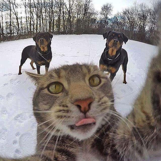 yok-artik-kedilerin-bizden-cok-daha-iyi-selfie-cektiklerinin-21-kaniti-1