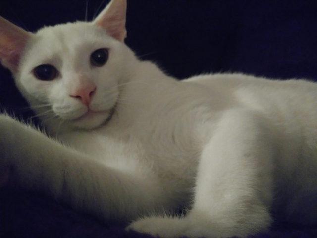 yok-artik-kedilerin-bizden-cok-daha-iyi-selfie-cektiklerinin-21-kaniti-3
