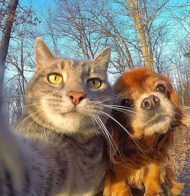 yok-artik-kedilerin-bizden-cok-daha-iyi-selfie-cektiklerinin-21-kaniti-4