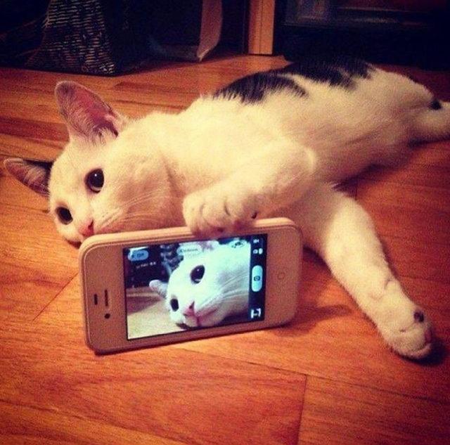 yok-artik-kedilerin-bizden-cok-daha-iyi-selfie-cektiklerinin-21-kaniti-6