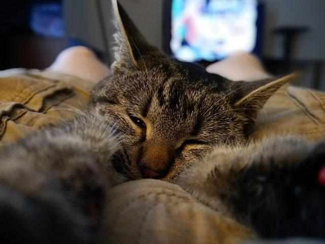 yok-artik-kedilerin-bizden-cok-daha-iyi-selfie-cektiklerinin-21-kaniti-7