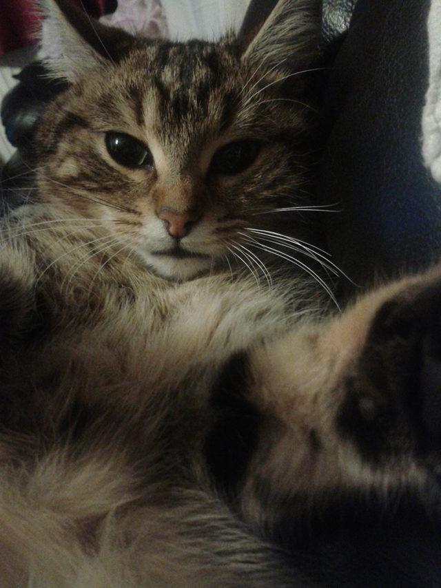 yok-artik-kedilerin-bizden-cok-daha-iyi-selfie-cektiklerinin-21-kaniti-9