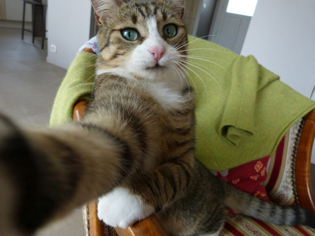 yok-artik-kedilerin-bizden-cok-daha-iyi-selfie-cektiklerinin-21-kaniti-10