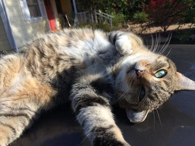 yok-artik-kedilerin-bizden-cok-daha-iyi-selfie-cektiklerinin-21-kaniti-12
