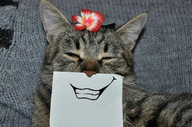 yok-artik-kedilerin-bizden-cok-daha-iyi-selfie-cektiklerinin-21-kaniti-13