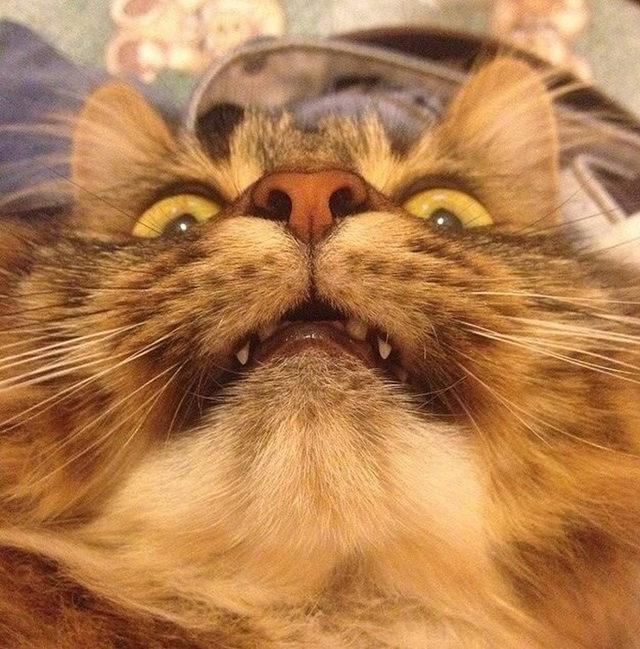 yok-artik-kedilerin-bizden-cok-daha-iyi-selfie-cektiklerinin-21-kaniti-15