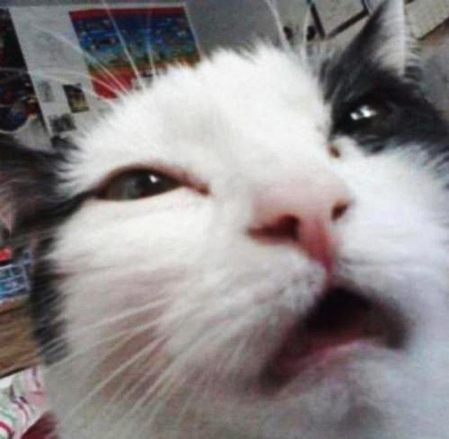 yok-artik-kedilerin-bizden-cok-daha-iyi-selfie-cektiklerinin-21-kaniti-18