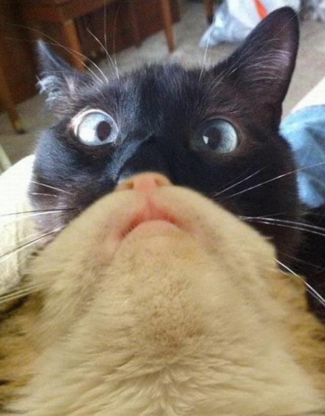 yok-artik-kedilerin-bizden-cok-daha-iyi-selfie-cektiklerinin-21-kaniti-21