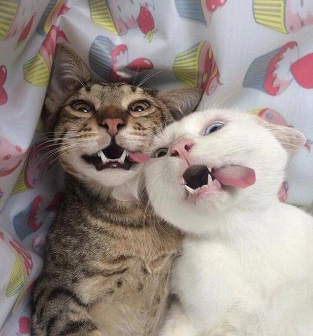 yok-artik-kedilerin-bizden-cok-daha-iyi-selfie-cektiklerinin-21-kaniti-24