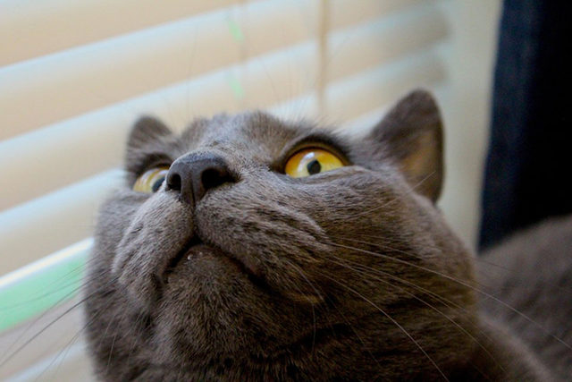 yok-artik-kedilerin-bizden-cok-daha-iyi-selfie-cektiklerinin-21-kaniti-25