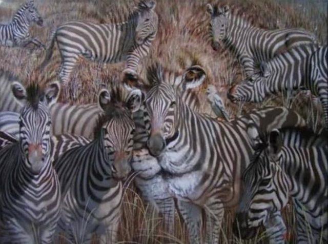 djur (1)