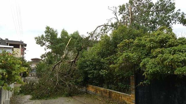 Kandıra'da hortum ağaçları devirdi, çatıları uçurdu (1)
