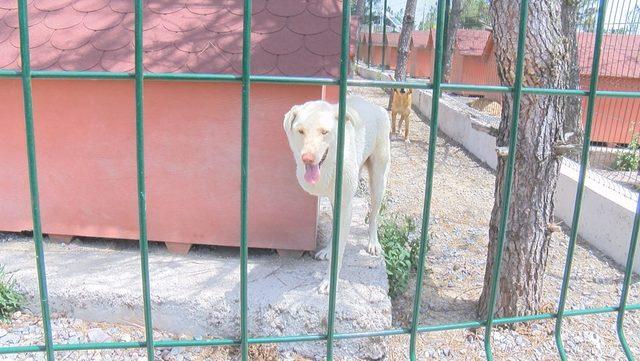 Engelli köpekler sahiplenilmeyi bekliyor