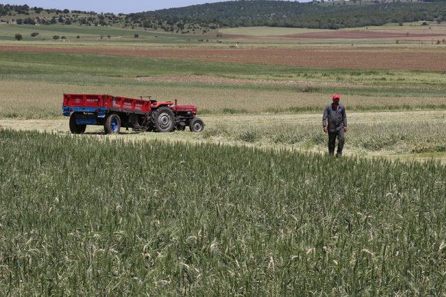Amasya'da dolu zararı büyük