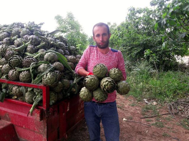 Yenişehir'de enginar ve ceviz üretim alanları arttı
